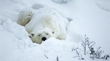 Vi er vores egen værste modstander: Den menneskelige psykologi gør os elendigt rustet til at håndtere de truende klimaforandringer