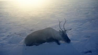 Sidste år annoncerede Danmark sit krav på en stor bid af Arktis, og nu har Rusland budt ind på et kæmpe område – som delvist overlapper det danske ønske