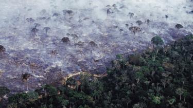 Fra 2008 til 2011 stod skovrydning for 28 procent af Brasiliens samlede CO2-udslip, men det tal er sandsynligvis på vej op som følge af den tiltagende skovhugst.