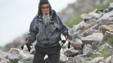 Den lille søkonge, der yngler i Thuledistriktet, hører stadig med til menuen i fangersamfundet. Gammelt blander sig konstant med alt det nye, klimaforandringerne bringer med sig. Fuglen spises gerne kogt eller spæksyltet i sæl.