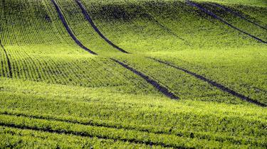 Samtidig med at skove og sletter vokser frem i Europa, er Danmark verdens andet mest opdyrkede land og har mindre natur end selv Holland. Dansk naturpolitik er 'provinsiel', mener biolog. Enhedslisten vil nu tage jord fra landbruget, men miljøministeren afviser at udvide den frie natur