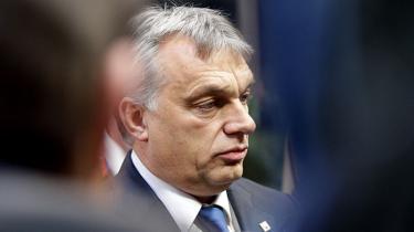 De ungarske ambassader rapporterer, at de får strømme af støtteerklæringer i forbindelse med Viktor Órbansflygtningehåndtering. Han er et ikonog i den grad en trendsætter især for nationalkonservative rundt omkring i Europa.