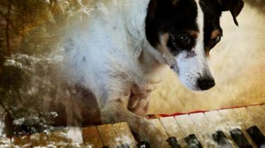 Hunden Lolabelle er katalysator for en række af Laurie Andersons brogede betragtninger og meditationer over tilværelsen, dens afslutning og den menneskelige tilstand generelt. Til en begyndelse.