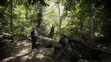 Ifølge Naturpakken, som blå blok blev enige om i går,  skal der udlægges i alt 13.300 yderligere hektar skov til såkaldt biodiversitetsformål, således at det samlede areal med blandt andet urørt skov kommer op på cirka 25.000 hektar.
