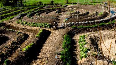 80 procent af verdens fødevarer produceres af små, uafhængige landbrug, fremgår det af dokumentarfilmen 'I morgen'.