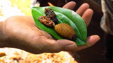 I dokumentarfilmen BUGS, smages på en række lokale insekter rundt om i verden – som gigalarver fisket frem fra den røde australske jord af gamle aboriginske kvinder med gråt skæg, afrikanske termitter, brodløse honningbilarver, langhornede græshopper og denne anmelders personlige grænsedrager: ostemider i bundrådden ost.