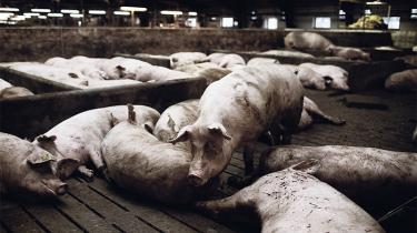 Da forskere fra Aarhus Universitet i 2010 lavede en rapport, som rejste kritik af forholdene i dansk svineproduktion, kom det Landbrug & Fødevarer for øre. Organisationens folk kontaktede forskerne i Aarhus og bestilte også som modsvar sin egen rapport