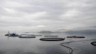 Havbrug udgør Norges næststørste indtægtskilde kun overgået af olien. Her et dambrug ved Hitrabugten ved Trondhjem.