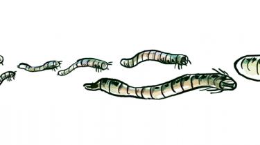 Kriblekrablekorrespondenten finder inspiration på nettet. Var det noget med et måltid på orm i flaske, maste fluer på panden og cambodjanske taranteller på størrelse med en voksen mands hånd?