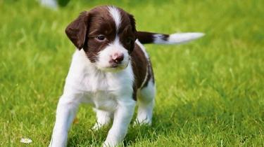 Hver dag bliver massevis af brugte ting sat til salg.Og selv om de i udgangspunktet ikke behøver være noget særligt, kan de vise sig at være det. Merete Haahr har 13 hundehvalpe til salg.