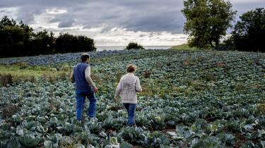 De Radikales landbrugspakke lægger også op til en ændring af landbrugsstøtten. Den gældende hektarstøtte skal justeres, så der gives øget støtte til de første hektarer. 'Det er et forslag efter fransk forbillede, som vil gøre det mere attraktivt at drive små landbrug,' siger partiets landbrugsordfører, Andreas Steenberg.