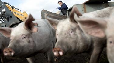 Der arbejder omtrent 4.600 rumænere i dansk landbrug.
