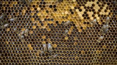 The Independent kan berette, at tre fjerdedele af verdens honning nu indeholder neonikotinoider.