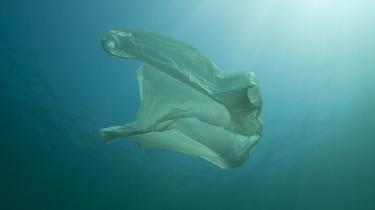 Hvalerne herude smager på stykkerne af plastic og blander dem med plankton.Der svømmer hvaler forbi herude midt på havet; men færre end der burde. Det må være nogens skyld, og hvis ikke det er nogens skyld, må det være nogens ønske.