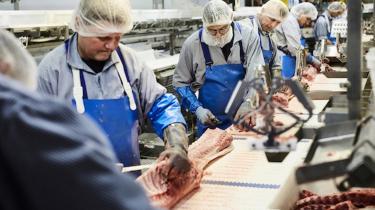 Svin bliver slagtet på Rønne andelsslagteri.