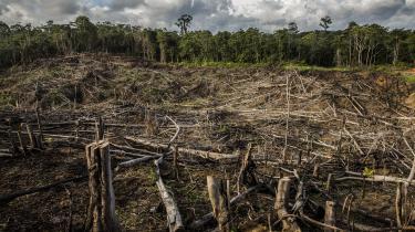 I 2011 indførte Indonesien et stop for nye tilladelser til træfældning og plantagedrift i områder med urskov og tørvebundsarealer. Men det har ikke vist sig så succesfuldt som håbet, ifølge flere eksperter