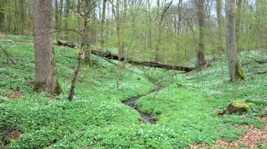 I 2007 ændrede Miljøministeriet de danske skoves tilstand til 'gunstig' i en indberetning til EU, selv om forskerne på Aarhus Universitet havde erklæret, at skovenes tilstand var 'ugunstig'.