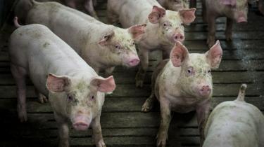 svineproduktion Tuse Næs dansk landbrug miljø