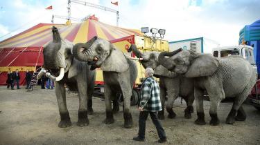 »Ledende politikere i landets førende partier er stærkt optaget af tre cirkuselefanters psykiske og fysiske velbefindende, mens de lever med, at millioner af grise hvert år dør på grund af dårlige forhold i landbruget. Et flertal i Folketinget har således vedtaget, at det skal være forbudt at holde vilde dyr i cirkus.«