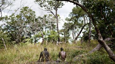 Dokumentation viser, at træ, der tidligere ikke kunne benyttes kommercielt, fordi tømmeret var af dårlig kvalitet, i dag bliver fældet og brugt til bioernergi. Det sker blandt andet områder høj biodiversitet, skriver Jacob Sørensen, der er aktiv i miljøbevægelsen NOAH.