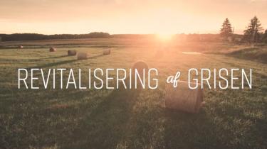 Gris kan mere. Screendump fra Landbrug & Fødevarers brandingvideo.
