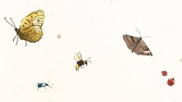 Der er problemer på landet – og det drastiske fald i antallet af insekter kan have alvorlige konsekvenser for miljøet