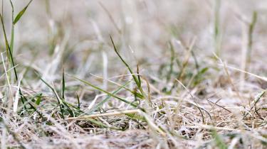 Over alt i landet er det grønne græs blevet brunt.Tørken betyder også, at de landbrugets såkaldteefterafgrøder ikke spirer – og det er dårligt nyt for miljøet.