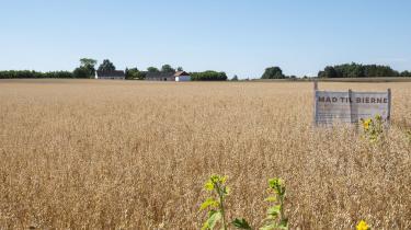 Den varme og tørre sommer har sat stort aftryk på afgrøderne i det danske landbrug.
