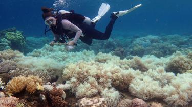 Koralrev blegner og dør som konsekvens af den globale opvarmning som her ved Australiens Great Barrier Reef. Det fremgår af klimapanelets rapport, at selv hvis det lykkes at bremse temperaturstigningen ved 1,5 grader, så vil 70-90 pct. af verdens koralrev være kompromitteret.