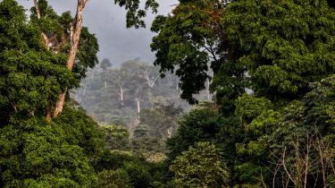 Skal Parisaftalen overholdes og klimakatastrofer afværges, bliver det formentlig nødvendigt at støvsuge atmosfæren for CO2. At plante træer er langt bedre end at deponere kraftværkers CO2 i undergrunden, siger global ngo-koalition i ny rapport. Men det kræver politiske initiativer, der bl.a. kan sikre et fornyet skovdække på størrelse med Indien