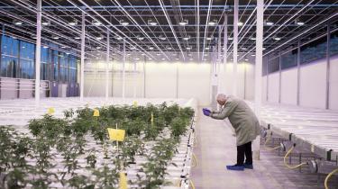 Nu er der åbningsreception for Europas største cannabisfarm. Den fynske storgartner Mads Pedersen har allerede investeret 110 millioner kroner i at blive kontinentets største producent af medicinsk cannabis.
