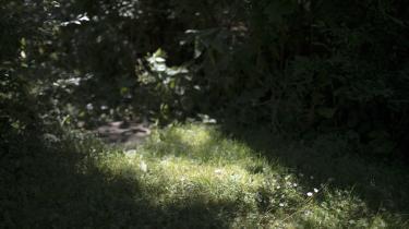 Tiden er kommet til at nyde sommerens haveudbytte ioktobersolen, inden efteråret indtager scenen.