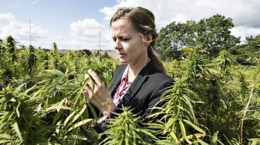 Med Folketingets vedtagelse af forsøgsordningen med medicinsk cannabis bruger politikerne lægevidenskaben som både belæg og ekspertmæssig rygdækning for at legalisere behandlingen med medicinsk cannabis, fordi befolkningen efterspørger den – på trods af det manglende evidensgrundlag for effekten af behandlingen, skriver dagens kronikør.