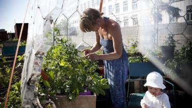 Prags Byhaver er en af de 39 grønne frivilligprojekter, der skallukkesefter fyringen af frivilligkoordinatoren i Københavns Kommune.