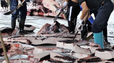 Fra juli 2019 træderJapan ud af den Internationale Hvalfangstkommission, IWC, og genoptager den kommercielle hvalfangst.