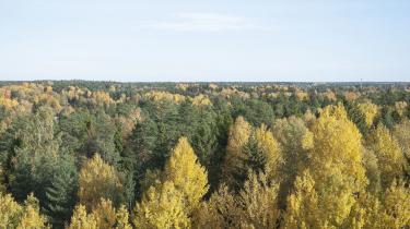 En del af løsningen på den globale klimakrise gemmer sig i skoven. Skovene oplagrer enorme mængder CO2 fra atmosfæren, og hvis vi forvalter og anvender skovene fornuftigt, kan de begrænse Europas udledninger med op til en femtedel