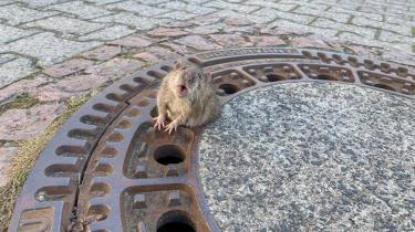 Selv en rotte kan vække medlidenhed, næsten sympati, hvis situationen er til det. Og det har faktisk bemærkelsesværdige perspektiver.