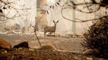 Kombinationen af den tørre og varme sommer og den manglende efterårsregn sidste år betød, at ilden havde gode betingelser i store dele af Californien. Det gik især ud over den californiske by Paradise, hvor voldsomme skovbrande hærgede.