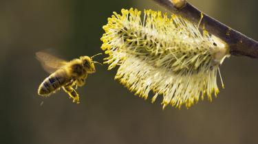 Det bayerske borgerinitiativet 'Red bierne' kæmpee for at opretholde alle insektarter. Over tre fjerdedele af alle flyvende insekter er forsvundet fra de tyske naturbeskyttelsesområder siden 1989. Det har drastiske konsekvenser for hele økosystemet.
