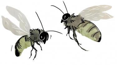 Danske pensionsselskaber har over en milliard kroner investeret i selskaber, som producerer de pesticider, der ifølge forskning er til skade for bierne. EU forbød en række af de såkaldte neonikotinoider sidste år, men produkterne sælges fortsat globalt