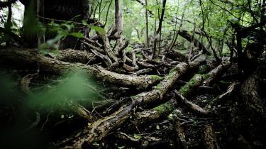Jo mere, man lader skoven stå og passe sig selv, des mere CO2 optager og lagrer den i sine voksende træer og i jorden under skoven.