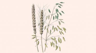 GMO-afgrøder bliver på en gang fremstillet som et teknologisk mirakel og et overgreb mod naturen. Ifølge FN's klimapanel er de genmodificerede planter en del af løsningen på klimakrisen. Spørger man Greenpeace, er de en miljømæssig katastrofe. I disse år nærmer de to positioner sig hinanden