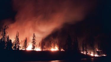 Skovbrand i Yellowstone National Park i 1988. Allerede den gang kædede forskere det stigende antal skovbrande sammen med den globale opvarmning.