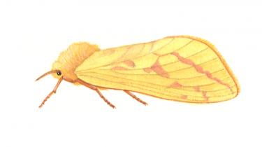 Thomas Simonsen er seniorforsker ved Naturhistorisk Museum i Aarhus, hvor han forsker i insektevolution og -diversitet. Hans yndlingsinsekt er en humleæder