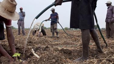 Om biomasse er bæredygtigt, afhænger af en række faktorer, blandt andet i hvor stort omfang man bruger det, hvilke råvarer det er fremstillet af, og hvilken type jord de bliver dyrket på. Her er vi i Mozambique, hvor bønneplanten/træet 'jatropha' vandes. Træet får nødder, man kan presse olie af.