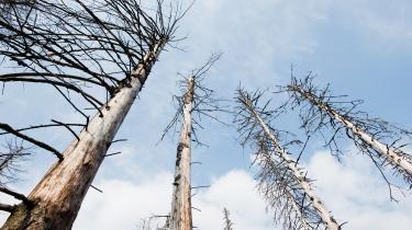 Skov ødelagt af barkbiller i Oderbrück.