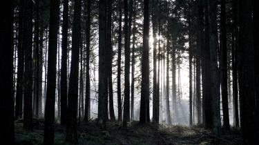 SF vil omlægge 200.000 hektar jord til skov inden for de næste fire år. Udspillet skal finansieres gennem en skovfond, som staten skal skyde tre milliarder kroner i over de kommendefire år. Størstedelen af finansieringen vil SF dog finde ved at optage lån med statslig garanti på 32 milliarder kroner.
