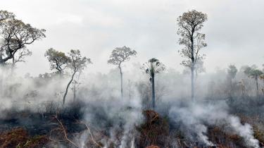 Den brasilianske præsident, Jair Bolsonaro, har satmilitæret ind som brandmænd og forbudtskovafbrænding i 60 dage for at stoppe skovbrandene i Amazonas.