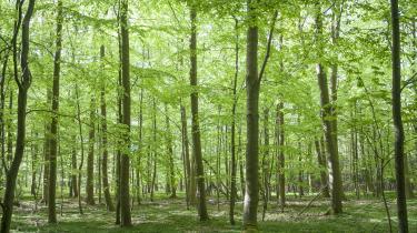 Niels-Christian Levin Hansen og Anne-Mette Binder mener, at der burde gives flere midler til skovrejsning - især til skovrejsning tæt på byerne, fordi bynær skov ifølge dem har langt den største samfundsmæssige værdi.