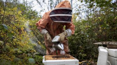 Jeg blev biavler, fordi jeg elsker honning og gerne ville lære mine børn om vejen fra jord til bord. Men jeg forstår nu, at jeg er del af en bevægelse.